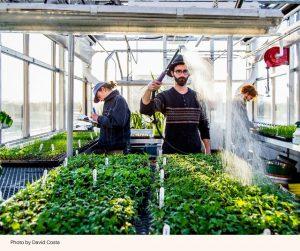 Die Freiwilligen des Umweltviertels Ahuntsic-Cartierville in Montreal wachsen und produzieren jedes Jahr rund 1800-Sorten Bio-Gemüse. (Foto: David Costa)
