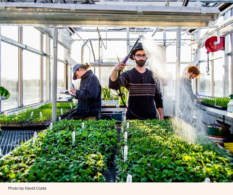 The volunteers of the Ahuntsic-Cartierville eco-neighborhood in Montreal get together to grow and produce around 1800 varieties of organic vegetables every year. (Photo: David Costa)